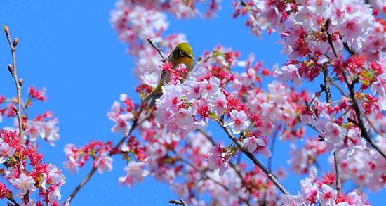 متن زیبا انگلیسی درباره بهار و اشعار زیبای فصل بهار با ترجمه فارسی