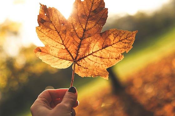 عکس پروفایل دست و برگ های پاییزی با جملات و اشعار ویژه فصل پاییز خزان